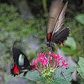 Butterfly in move 2.jpg
