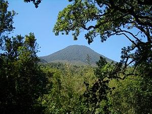 Bwindi Impenetrable National Park - Bwindi Impenetrable Forest