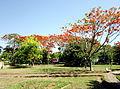 Công viên Nguyễn Văn Trỗi.jpg