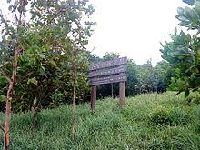 企业植林计划