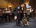 CBP Canine demonstration on the Hill (25477854745).jpg