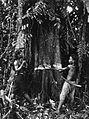 COLLECTIE TROPENMUSEUM Het omhakken van een boom door Dajaks Borneo. TMnr 60034032.jpg