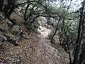 Camí a la Serra de Bellmunt (setembre 2012) - panoramio.jpg