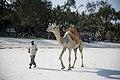 Camel Riding, Diani Beach.jpg