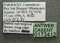 Camponotus dimorphus casent0173412 label 1.jpg