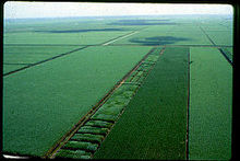 Canal Point Florida Sugarcane from Air 1968.jpg