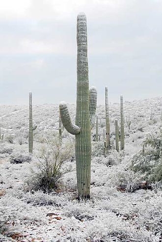 Tucson, Arizona - During wintertime, snow may fall in Tucson on rare occasions.