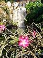 Cascade fleurie.jpg