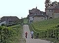 Chemin de Vinzel (Bursins, Vaud) - panoramio.jpg