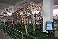 Chinese Platybelodon.jpg
