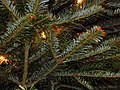 Christmas Tree Close Up.jpg