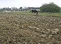 Church Farm - geograph.org.uk - 977336.jpg