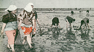 Gathering seafood by hand - Clam digging in Haneda, 1937