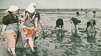 Clam digging - Clam digging in Haneda, 1937