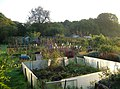 Clapperbrook Allotments - geograph.org.uk - 258135.jpg