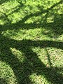 Closeup Grass with Tree Shadow (29329641185).jpg