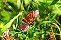 Cogne cascate lillaz (2)farfalla.jpg