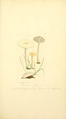 Coloured Figures of English Fungi or Mushrooms - t. 10.png