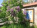 Comenius-Garten4.JPG