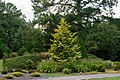 Conifer Garden 2 LR NBG.jpg