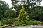 Conifer Garden 2 LR NBG.jpg