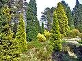 Conifers, Bedgebury Pinetum - geograph.org.uk - 796947.jpg