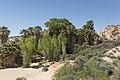 Cottonwood Spring Oasis (29214416634).jpg