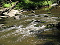 Crabtree Creek Company Mill Trail Umstead NC SP 0053 (3583758354).jpg