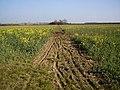 Cross field bridleway used by cycles - geograph.org.uk - 376533.jpg