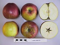 Cross section of Dawn, National Fruit Collection (acc. 1944-019).jpg