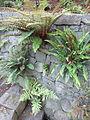 Crystal Springs Rhododendron Garden, Portland (2013) - 25.JPG