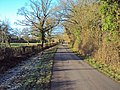 Cyclist on the lane to Brotheridge Green - geograph.org.uk - 1609049.jpg