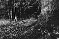 Dülmen, Börnste, Baum -- 2020 -- 3566 (bw).jpg