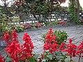DSCN0584 jardin.jpg