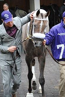 Jaywalk Horse Wikipedia