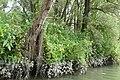 De Biesbosch P1290085.jpg