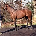 Declaration of war at stud.jpg