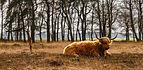Delleboersterheide – Catspoele Natuurgebied van It Fryske Gea. Omgeving van het heideveld 04.jpg