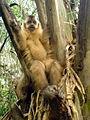 Descanso no Pantanal.jpg