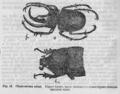 Descent of Man - Burt 1874 - Fig 16.png