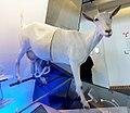 Deutsches Museum - sheep.jpg