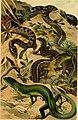 Deutschlands Amphibien und Reptilien. Eine Beschreibung und Schilderung sämmtlicher in Deutschland und den angrenzenden Gebietan vrokommenden Lurche und Kreichthiere (1897) (20701813599).jpg