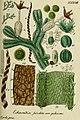 Deutschlands flora in abbildungen nach der natur (1832) (20879840692).jpg