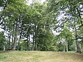 Dinedor Camp - geograph.org.uk - 560337.jpg