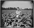 Director of Mint now Maryland farmer. Solomons Island, Md., July 29. It's a far cry from the plains of Wyoming to Maryland farm, but Director of Mint Nellie Tayloe Ross bridged the gap when LCCN2016878080.jpg