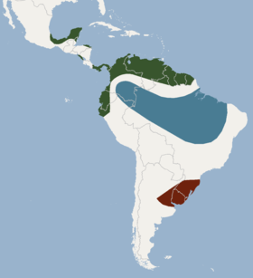 Distribution of Eumops bonariensis.png