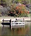 Dock, Yucaipa Reg Park 3-10-13 (8551557891).jpg