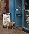 Dog, Rose Street, Edinburgh - geograph.org.uk - 950337.jpg