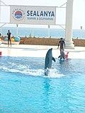 Dolphin - panoramio - svininykh.jpg