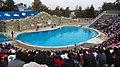 Dolphin discovery - panoramio (1).jpg